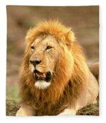 Male Lion Fleece Blanket