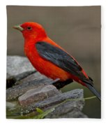 Male Scarlet Tanager Fleece Blanket
