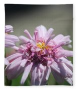 Marguerite Daisy Named Double Pink Fleece Blanket