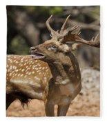 Mesopotamian Fallow Deer 4 Fleece Blanket