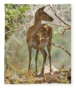 Mesopotamian Fallow Deer 5 Fleece Blanket