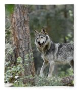 Mexican Grey Wolf 1 Fleece Blanket