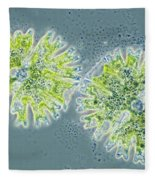 Micrasterias Fleece Blanket