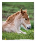 New Born Foal, Iceland Purebred Fleece Blanket