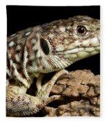 Ocellated Lizard Timon Lepidus Fleece Blanket