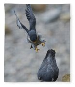 Peregrine Falcons Mating Fleece Blanket