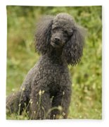 Poodle Dog Fleece Blanket