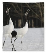 Red-crowned Cranes Courting Fleece Blanket