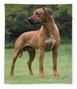 Rhodesian Ridgeback Dog Fleece Blanket