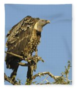Rueppells Vulture Fleece Blanket