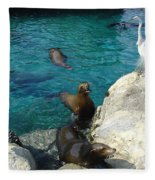 Seaworld Sea Lions Fleece Blanket