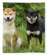 Shiba Inu Dogs Fleece Blanket