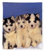 Siberian Husky Puppies Fleece Blanket