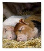 Sleeping Hogs  Fleece Blanket