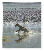 Spotted Hyaena Hunting For Food Fleece Blanket