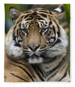 Sumatran Tiger Fleece Blanket