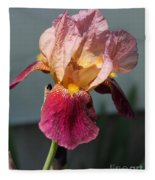 Tall Bearded Iris Named Indian Chief Fleece Blanket