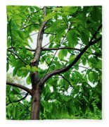 Trees In A Park, Adams Park, Wheaton Fleece Blanket