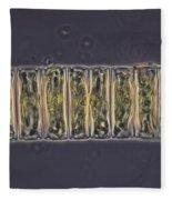 Ulothrix Sp. Algae, Lm Fleece Blanket