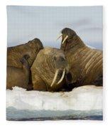 Walruses Resting On Ice Floe Fleece Blanket