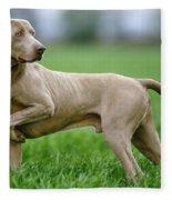 Weimaraner Dog Fleece Blanket