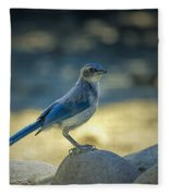 Western Scrub Jay Thief Fleece Blanket