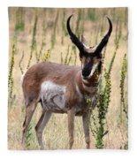 Where The Antelope Play Fleece Blanket