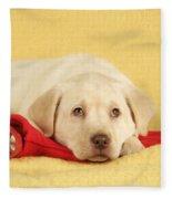 Yellow Labrador Puppy Fleece Blanket