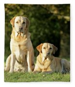 Yellow Labrador Retrievers Fleece Blanket