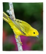 Yellow Warbler Dendroica Petechia Fleece Blanket