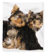 Yorkie Puppies Fleece Blanket