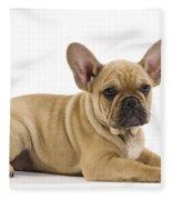 French Bulldog Puppy Fleece Blanket