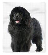 Newfoundland Dog Fleece Blanket