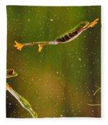 Red-eyed Tree Frog Fleece Blanket