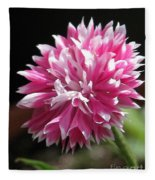 Bachelor Button From The Frosted Queen Mix Fleece Blanket