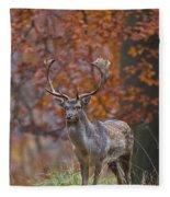 110221p135 Fleece Blanket