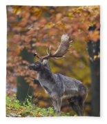 110221p137 Fleece Blanket