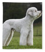 110506p121 Fleece Blanket