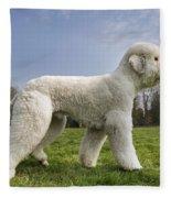 110506p134 Fleece Blanket