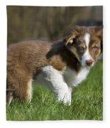 110506p161 Fleece Blanket