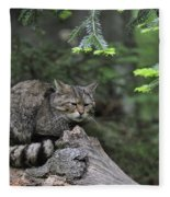 110613p008 Fleece Blanket