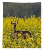 110714p143 Fleece Blanket