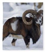 110714p271 Fleece Blanket