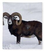 110714p275 Fleece Blanket