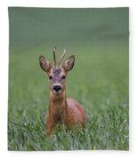110714p319 Fleece Blanket