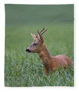 110714p320 Fleece Blanket