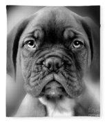 Boxer Dog Fleece Blanket