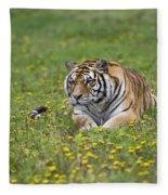 Siberian Tiger, China Fleece Blanket
