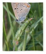 13 Balkan Copper Butterfly Fleece Blanket