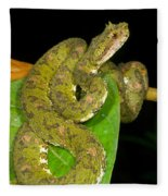 Eyelash Viper Fleece Blanket